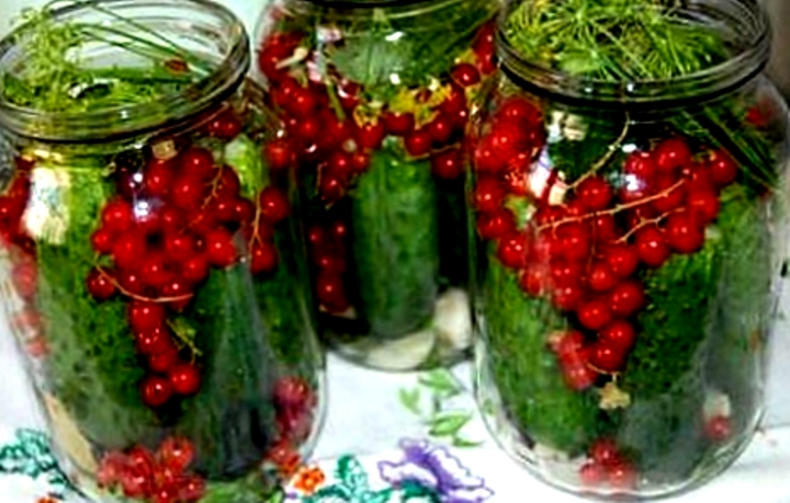 Рецепты заготовки огурцов на зиму
